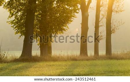 sunrise on the field - stock photo