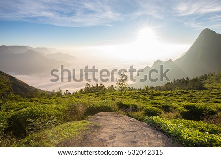 Sunrise on the Tea Plantations of Munnar in Kerala, India above cloud level