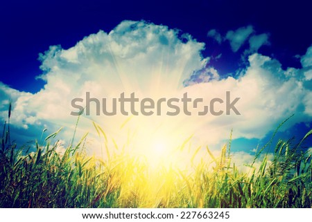 sunrise on the wheat field instagram stile - stock photo