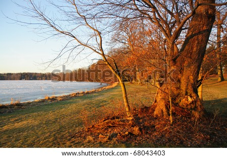 sunrise on trees, beside Lake Chautauqua - stock photo