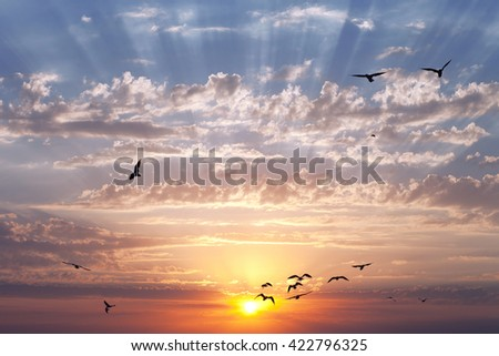 Sunrise or sunset with birds' silhouette on the sky. The sun's rays over pass the clouds. - stock photo