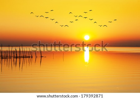 sunrise orange - stock photo