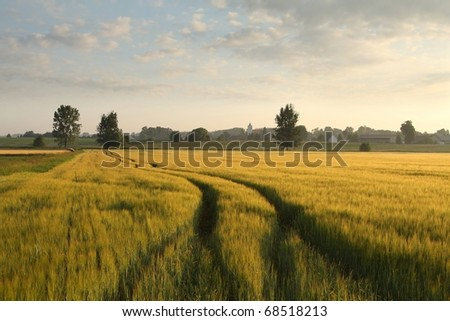 Sunrise over a field of grain with dirt road leading toward the horizon. - stock photo