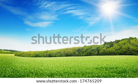 sunrise over a green field - stock photo