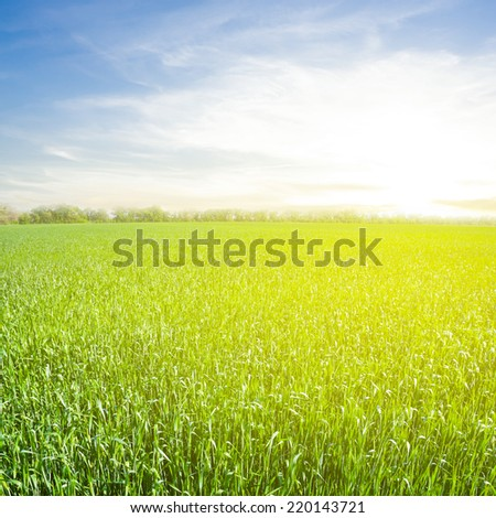 sunrise over a green fields - stock photo