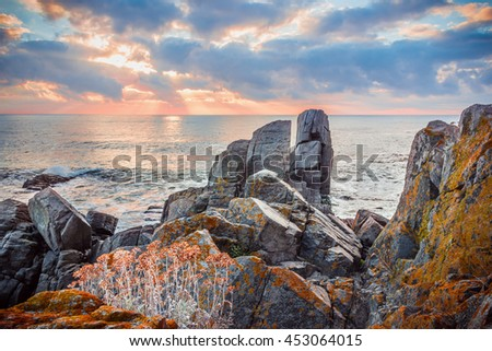 Sunrise over a rocky beach. Blooming wild flowers over the stones. - stock photo