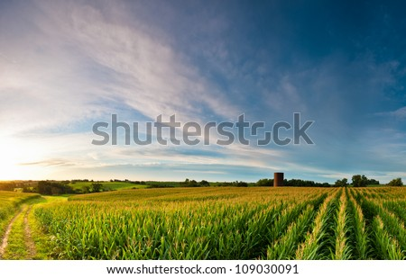 Sunrise over corn field with silo - stock photo
