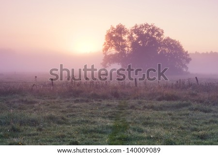 Sunrise over foggy meadow