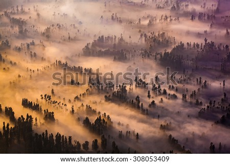 Sunrise over foggy mystic forest - stock photo