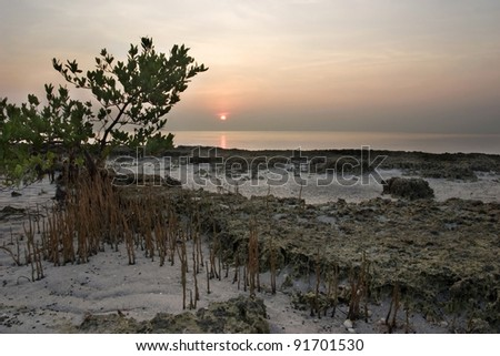 Sunrise over mangrove tree and beach in remote tropical wilderness - stock photo
