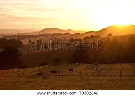 Sunrise over misty hills with grazing livestock in the foreground. - stock photo