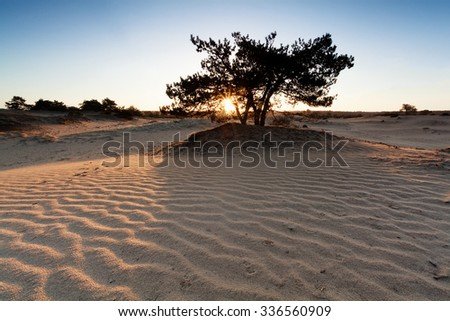 sunrise over sand dunes with wave texture and pine tree - stock photo
