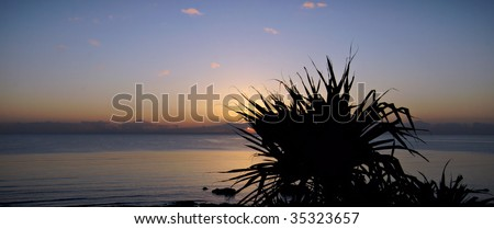 Sunrise over the ocean silhouettes a Pandanus tree - stock photo