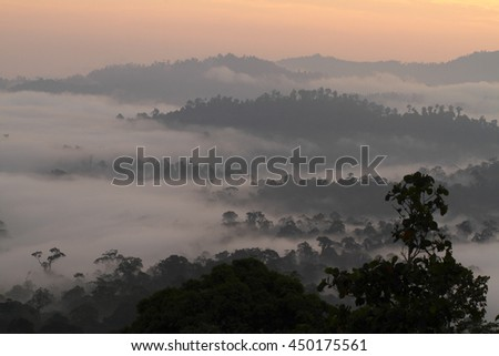 sunrise over the rainforest of Danum Valley Conservation Area,Sabah - Borneo, Malaysia