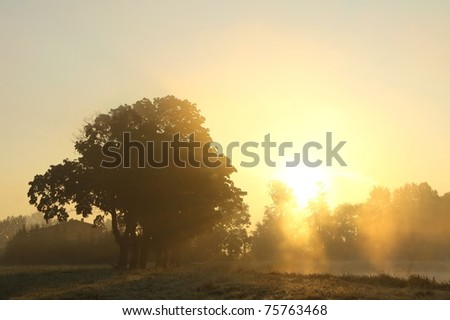 Sunrise over the trees growing near the lake on a foggy autumn day. - stock photo