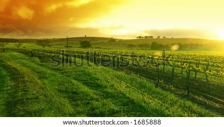Sunrise over the Vineyard in the Barossa - stock photo