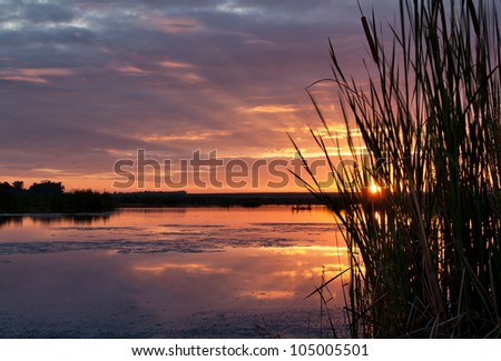 Sunrise seen through grass with rays of the sun visible - stock photo