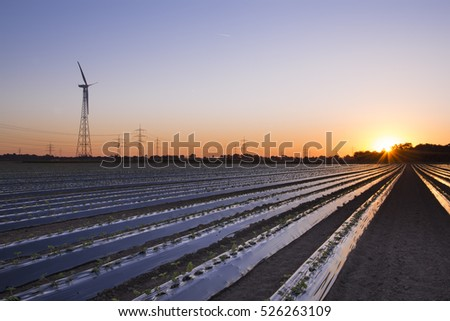 Sunrise strawberry fields