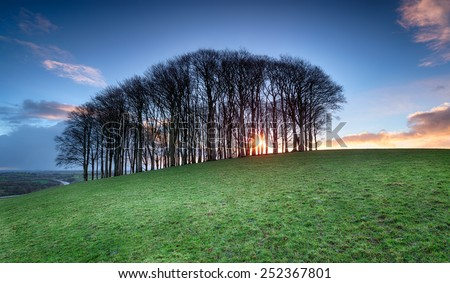 Sunrise through a small stand of beech trees on a hill near Lifton in Devon - stock photo