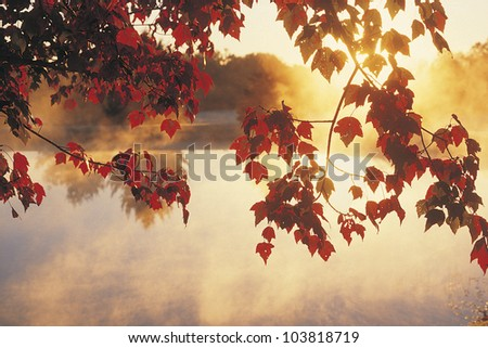 Sunrise Through Autumn Leaves, New England - stock photo