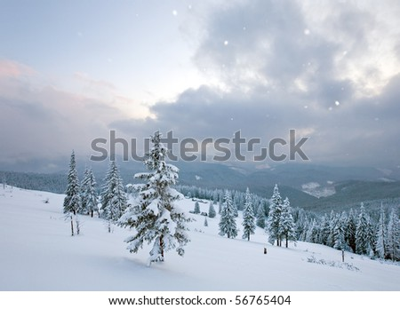 Sunrise, winter snowy fir trees on mountainside, snowfall and cloudy sky . View from Kukol Mount.  (Carpathian Mountains, Ukraine) - stock photo