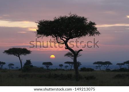 Sunrise with acacia trees - stock photo