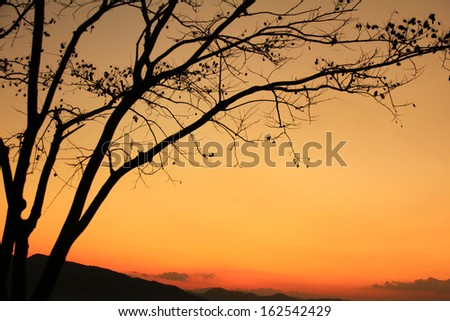 Sunrise with dead trees at Chonburi Province, at Thailand