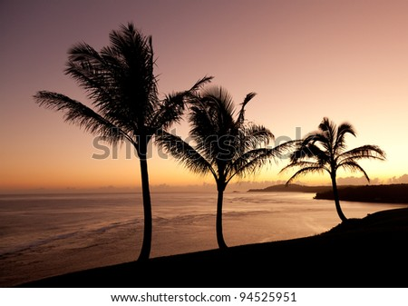 Sunrise with palm trees with Kilauea lighthouse in the distance - stock photo