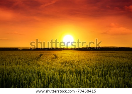Sunset above Barley Field