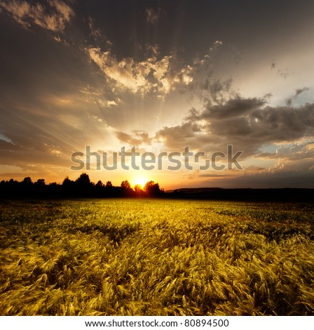 sunset and agricultural field