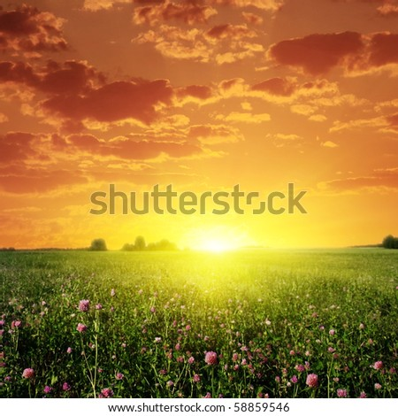 Sunset and clover filed. - stock photo