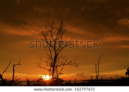 Sunset and dead tree
