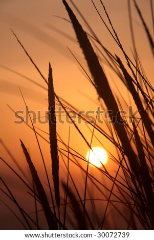 Sunset and dune grass in the foreground