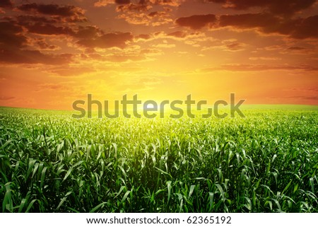 Sunset and field with green grass. - stock photo