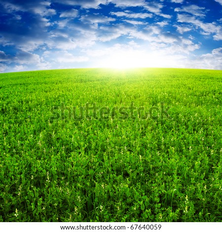 Sunset and green field. - stock photo