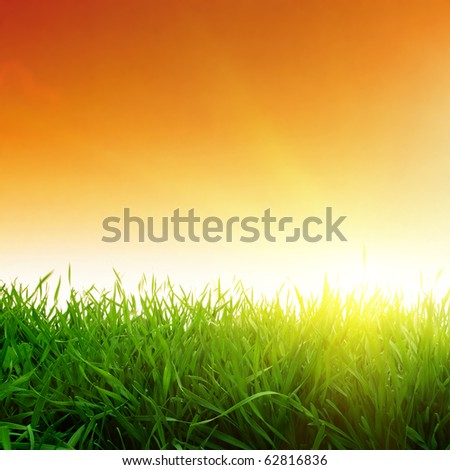 Sunset and green grass. - stock photo