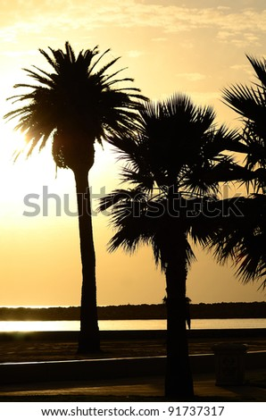 Sunset and palm trees at Newport Beach in the southwest part of Los Angeles CA - stock photo