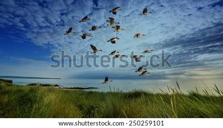 sunset and sea ang birds - stock photo