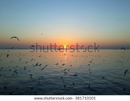 sunset and sky background on sea  and seagulls flying .