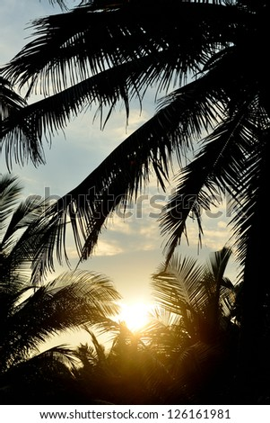 Sunset and the silhouette of palm trees. Photo control light - stock photo