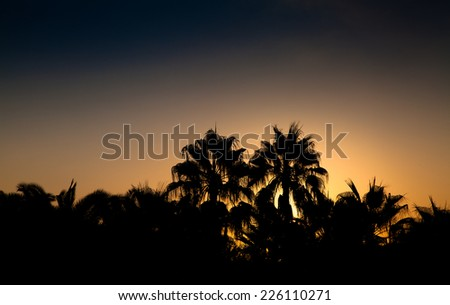 Sunset at a tropical beach with silhouettes of palm trees. - stock photo