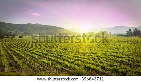 Sunset at a vineyard in Chile, vineyard on sunset or sunrise near Santiago Chile. Chile is famous for their wine export. Chile vineyard can been seen in middle region of the Chile country, vineyard