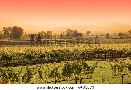 Sunset at a vineyard in Napa, California - stock photo
