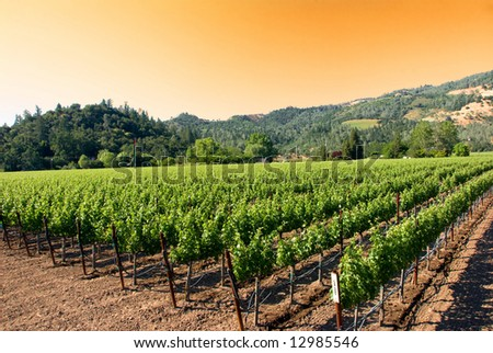 Sunset at a vineyard in the wine growing region of Napa in California. - stock photo