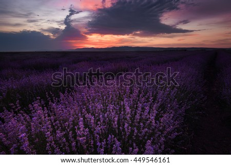 Sunset at lavender field near Bourgas city, Bulgaria - stock photo