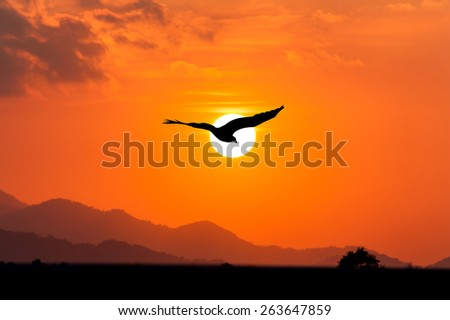 sunset at mountain range and eagle fly on the sunset - stock photo