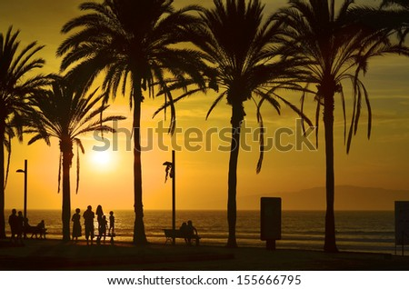 Sunset at the beach with palm trees. - stock photo