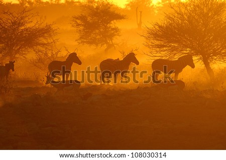 Sunset at the Okaukeujo waterhole, Namibia