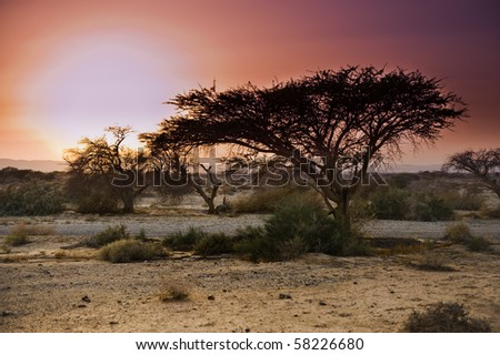 Sunset at the Savannah like Arava in the Negev desert, Israel - stock photo