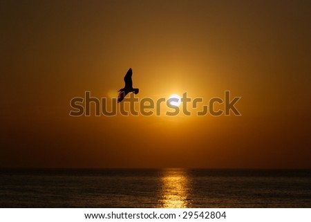 Sunset at the sea with the silhouette of a seagull